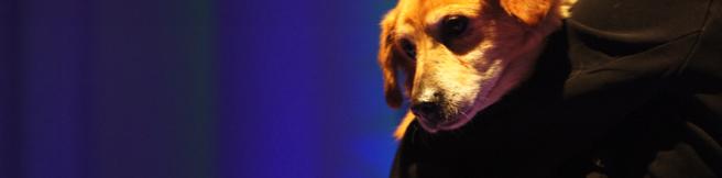 O psie, który zaczarował Filharmonię