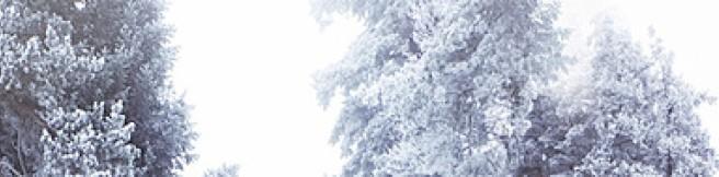 Czy świąteczne przeboje są nieśmiertelne i znośne w każdej aranżacji?