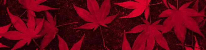 """Sekrety (nie)zabrane do grobu – """"Czerwone dziewczyny. Legenda rodu Akakuchibów"""" Kazuki Sakuraby"""